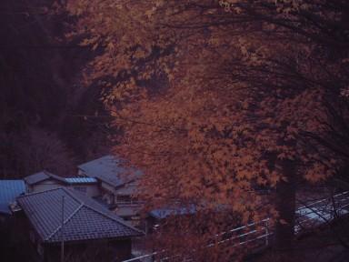 Photo_660